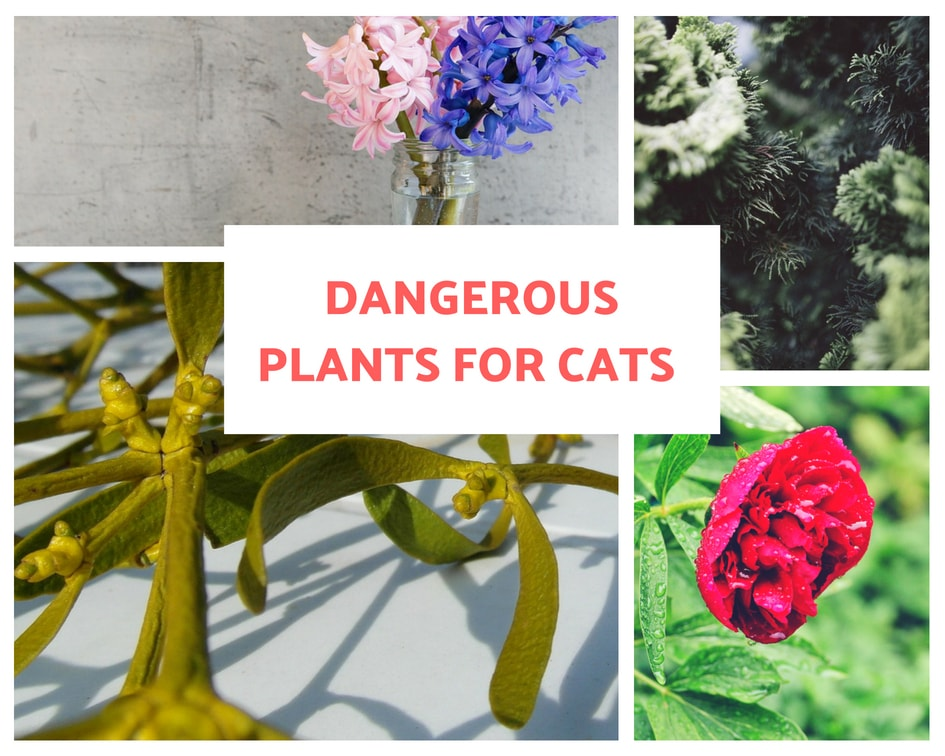 Flowers and plants dangerous for cats
