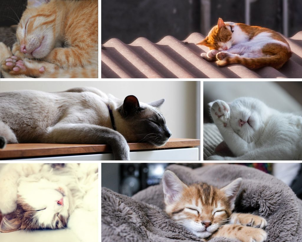 Sleeping cats and kittens