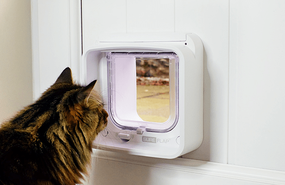 High tech door for cats to avoid intruders