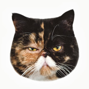 Pudge theCat YouTube Channel
