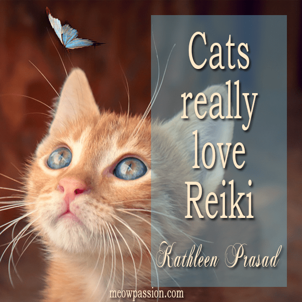 Quote by Kathleen Prasad about cats who love Reiki