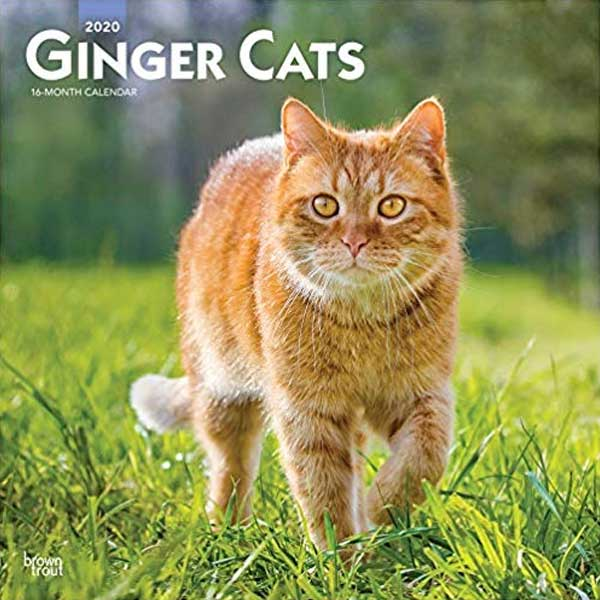 Ginger Cats  Calendar by BrownTrout Publishers Inc.