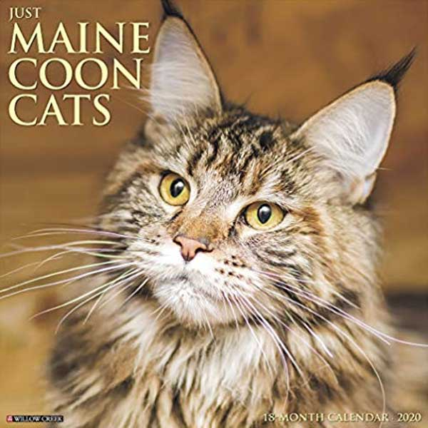 maine coon cats calendar by Willow Creek Press