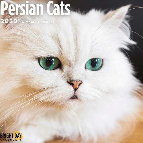 Persian cats calendar  on Etsy