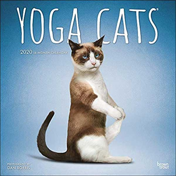 Yoga Cats 2020 12 x 12 Inch Monthly Square Wall Calendar
