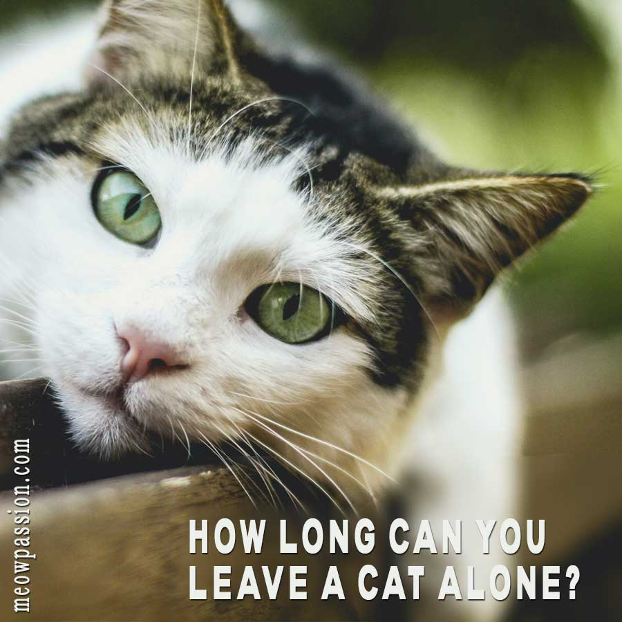 A cat that is staying alone at home