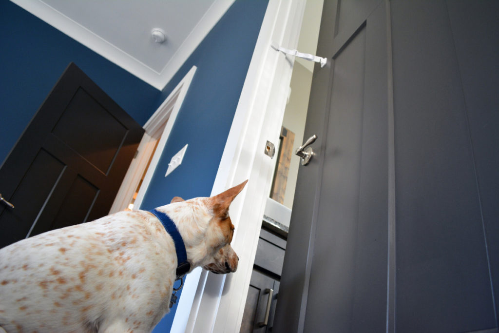 A white dog with ginger spots who is sitting by the door with Buddy Door solution that helps keep dogs out of kitty litter box