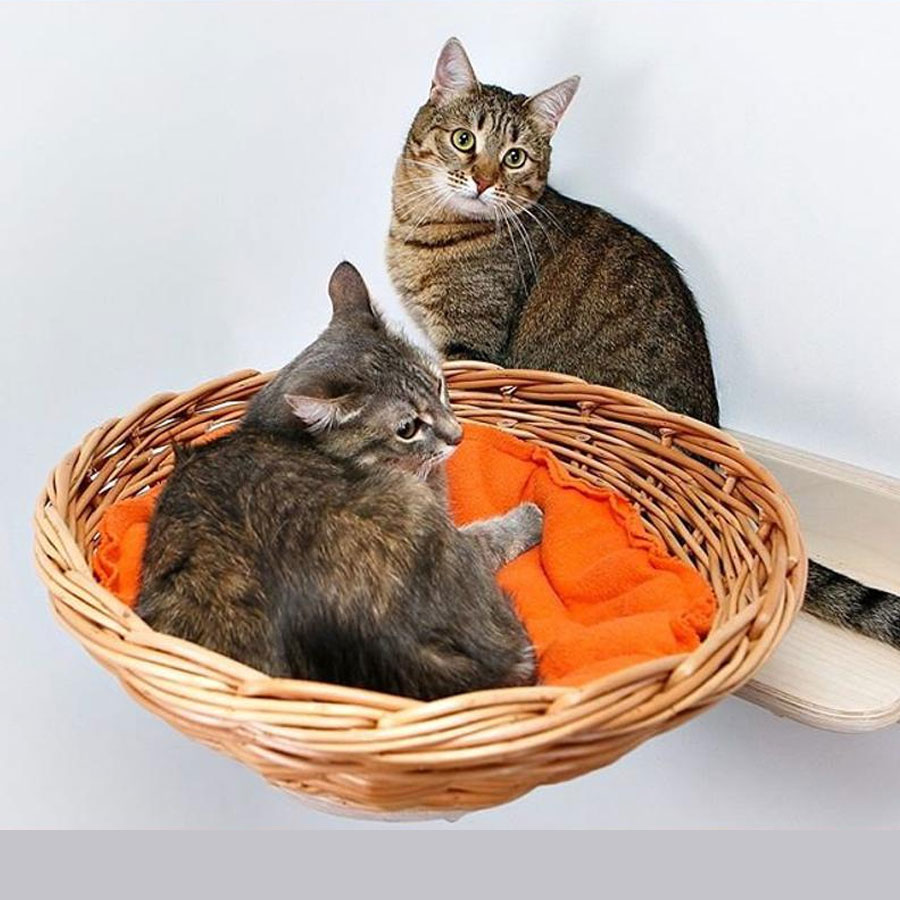 Two cats, one is lying in bed nest cat hammock and other is sitting on mounted shelf