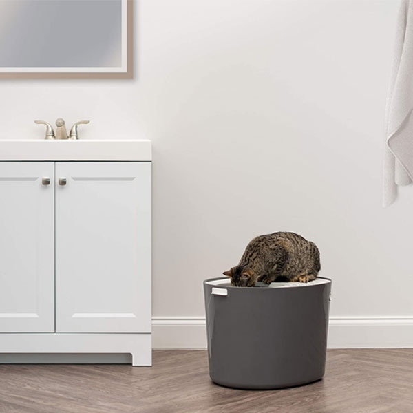 Grey cat litter box with a cat sitting at the top in a bathroom