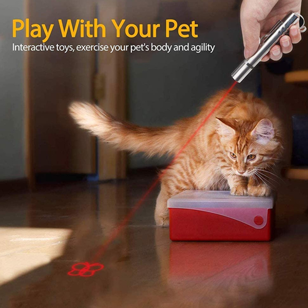 A ginger kitty is playing with butterfly pattern on laser pointer